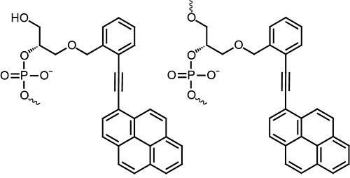 Figure legend: To the left a 5' placed oTINA molecule and to the right an internally inserted oTINA molecule